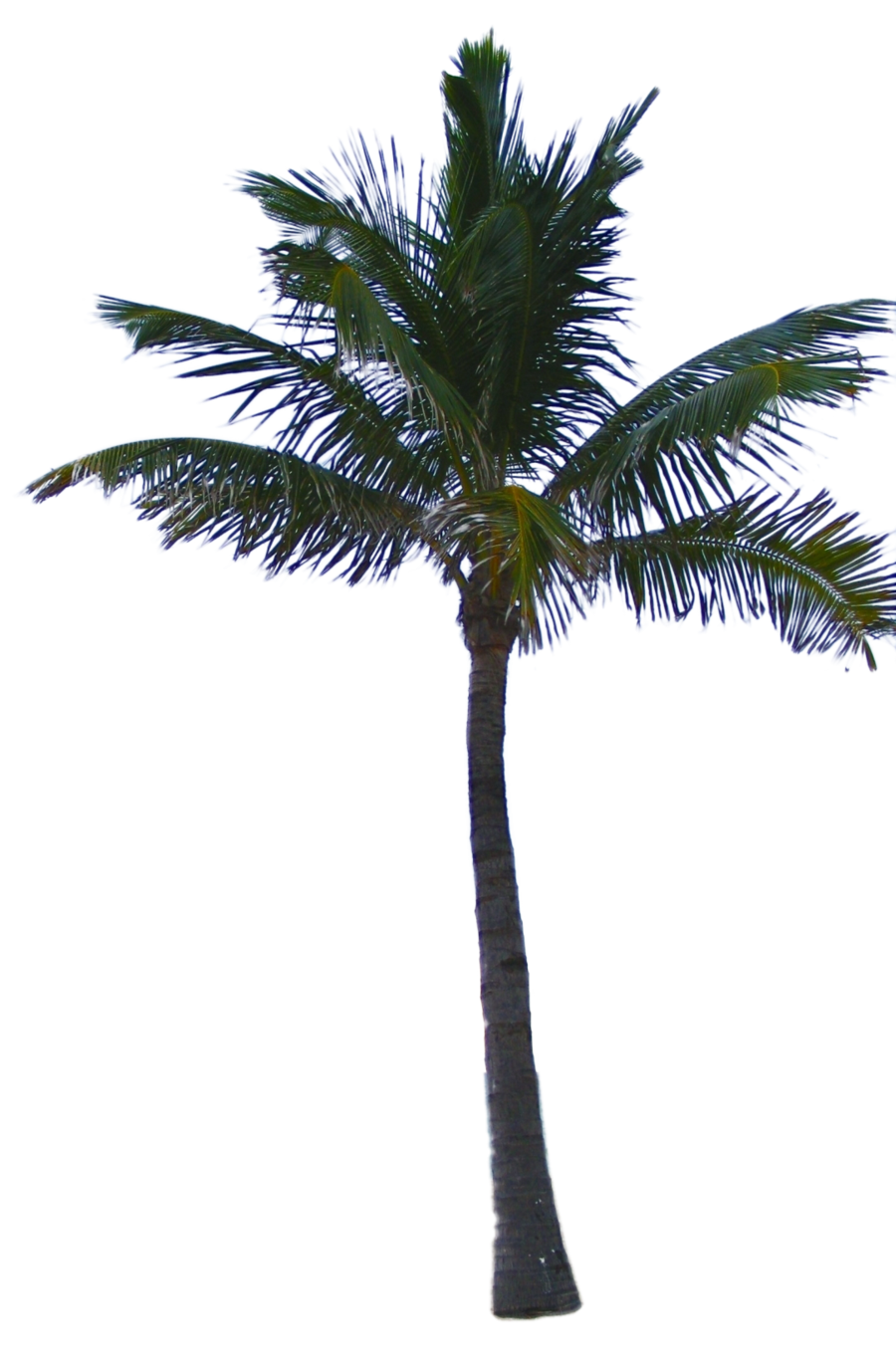 Just sharing some stuff, please link if used / improved these are being  used in a greenscreen video as background elements Palm Tree Tube Stock PNG - PNG Of A Palm Tree