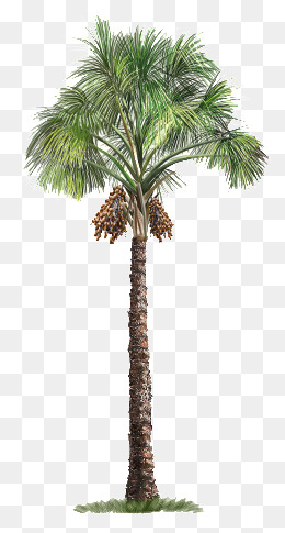 palm tree, Palm Tree, Trees, Hand-painted Tree PNG Image and Clipart - PNG Of A Palm Tree
