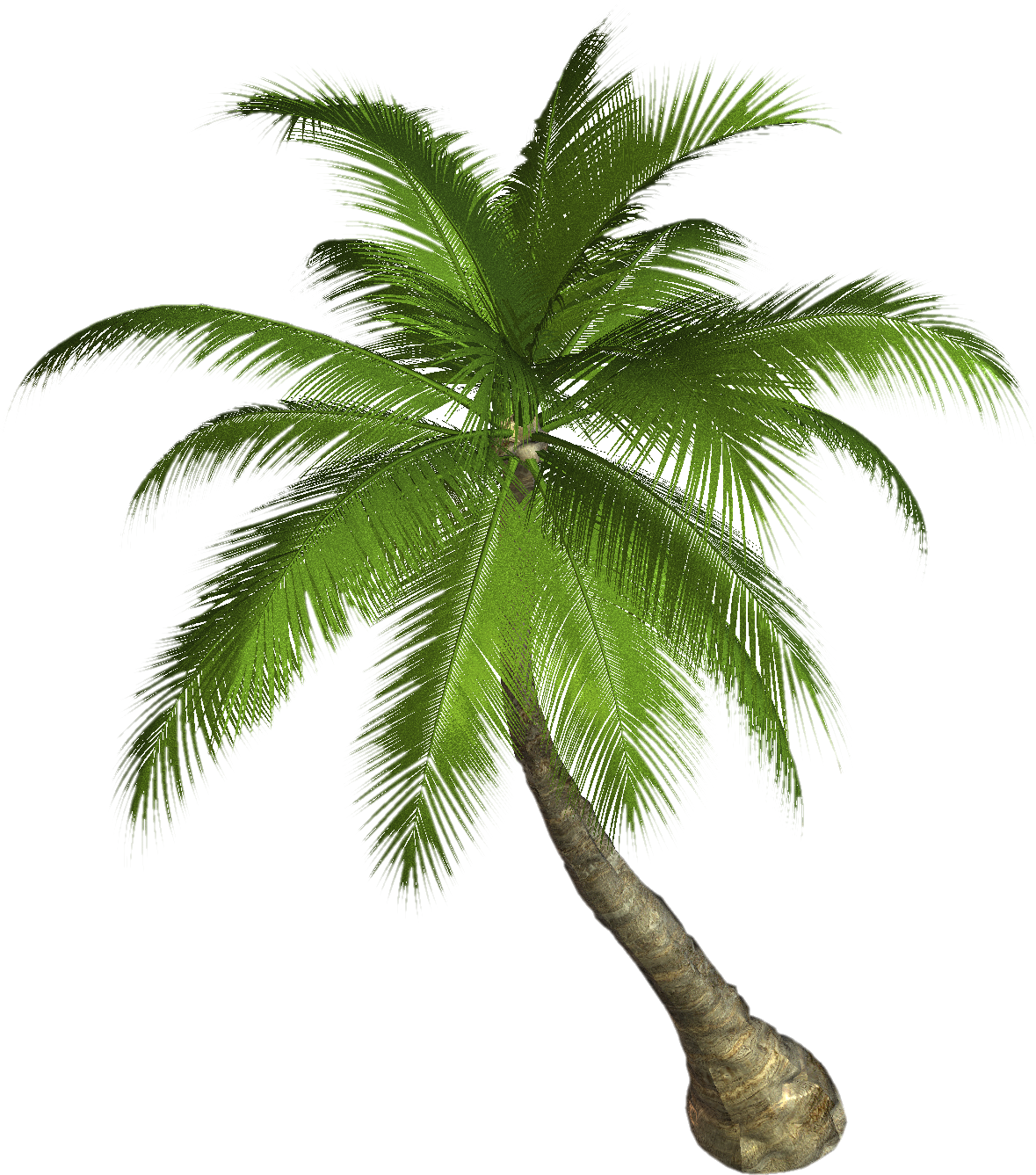Palm tree PNG - PNG Of A Palm Tree