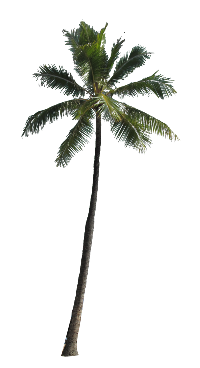 Palm Tree PNG Image - PNG Of A Palm Tree