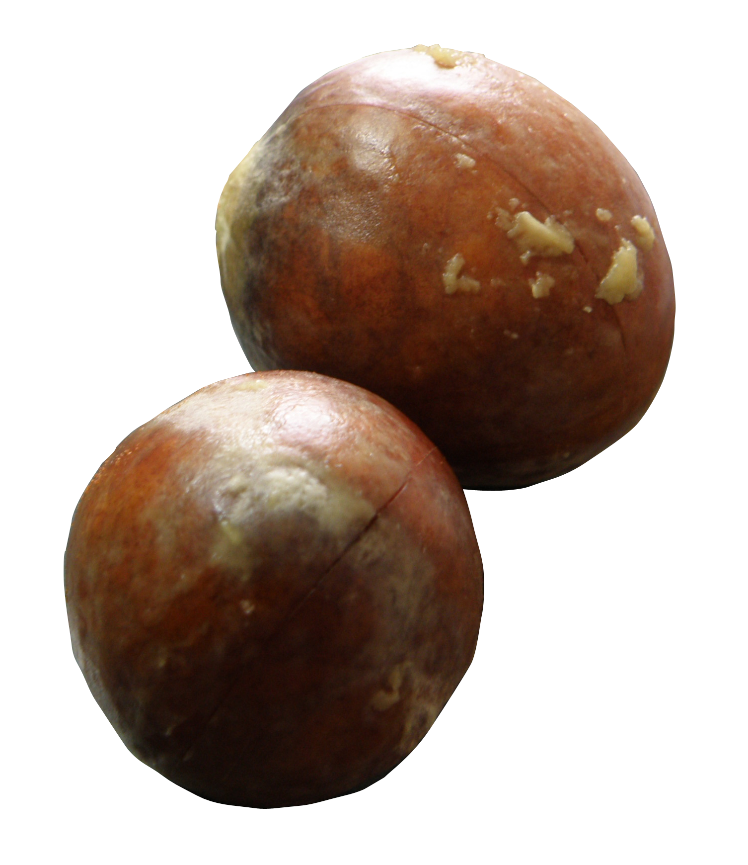 File:Avocado Seeds.png - PNG Of A Seed