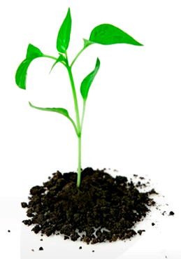 Plant_In_Dirt - PNG Of A Seed