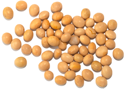 Plant The Seeds Of Success - Soybean Seed PNG - PNG Of A Seed