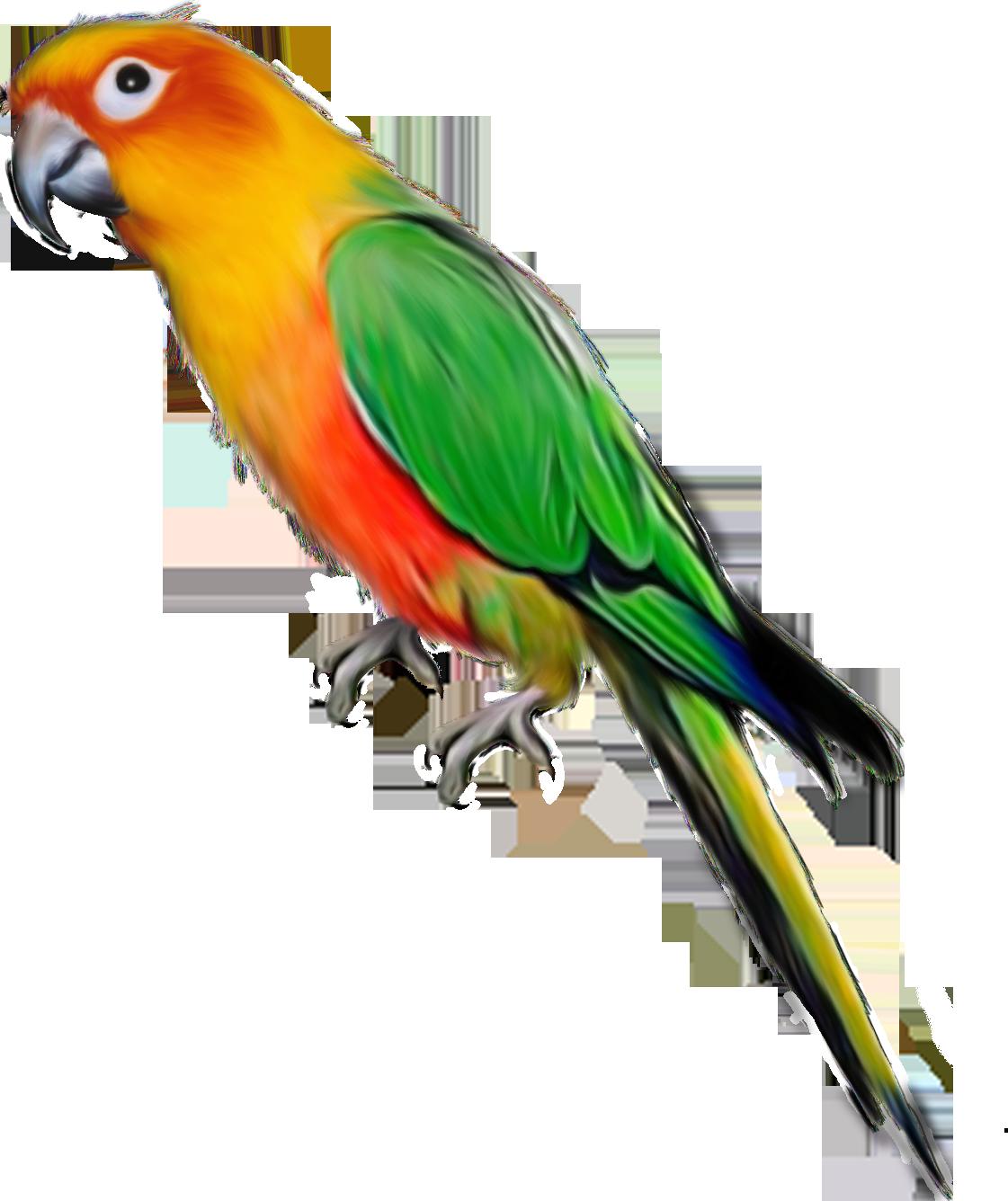 PNG Oiseau - 77788