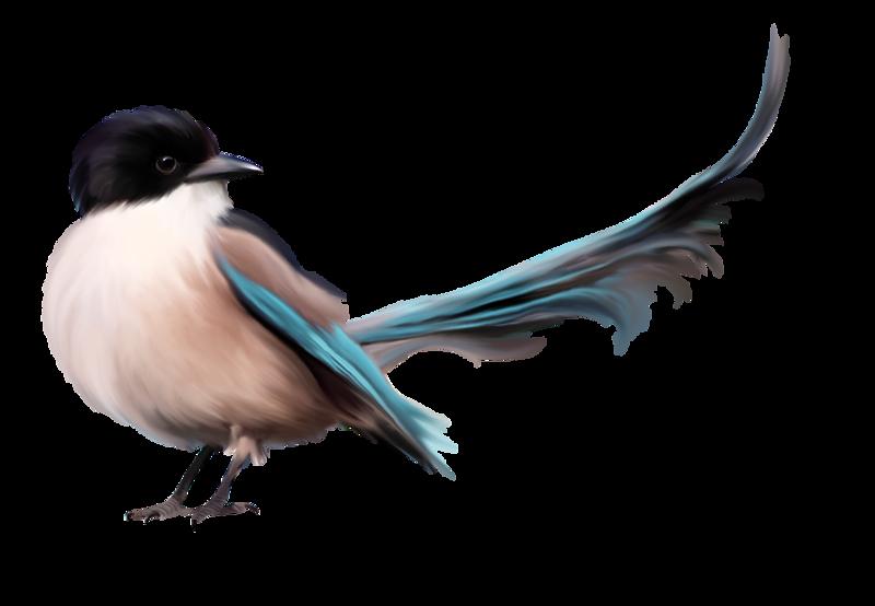 PNG Oiseau - 77784
