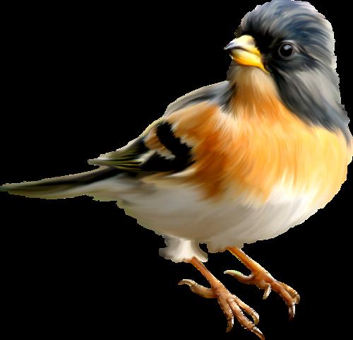 PNG Oiseau - 77783