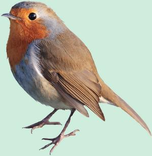 PNG Oiseau - 77792