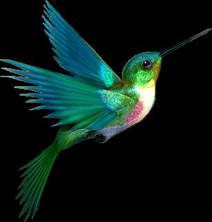 PNG Oiseau - 77795