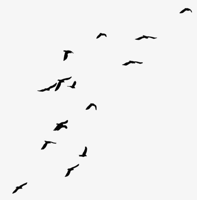 PNG Oiseau - 77793