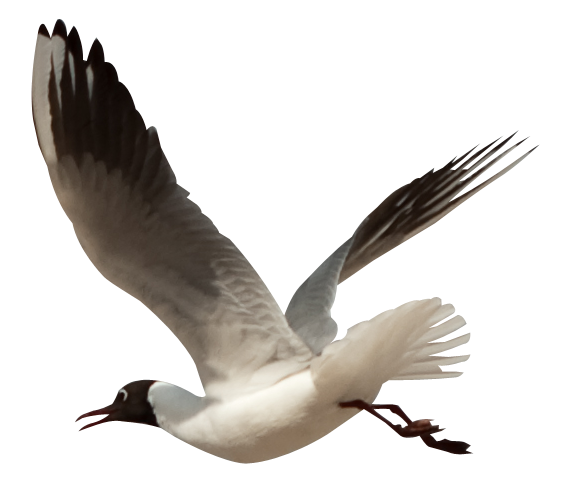 PNG Oiseau - 77785