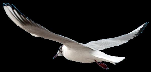 PNG Oiseau - 77790