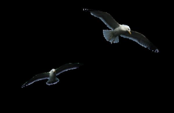 PNG Oiseau - 77780