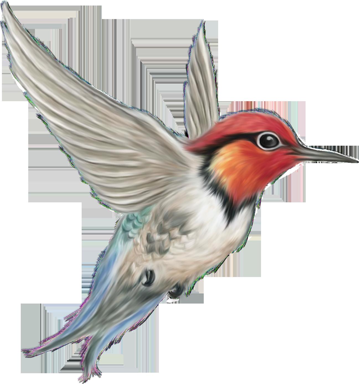 PNG Oiseau - 77794