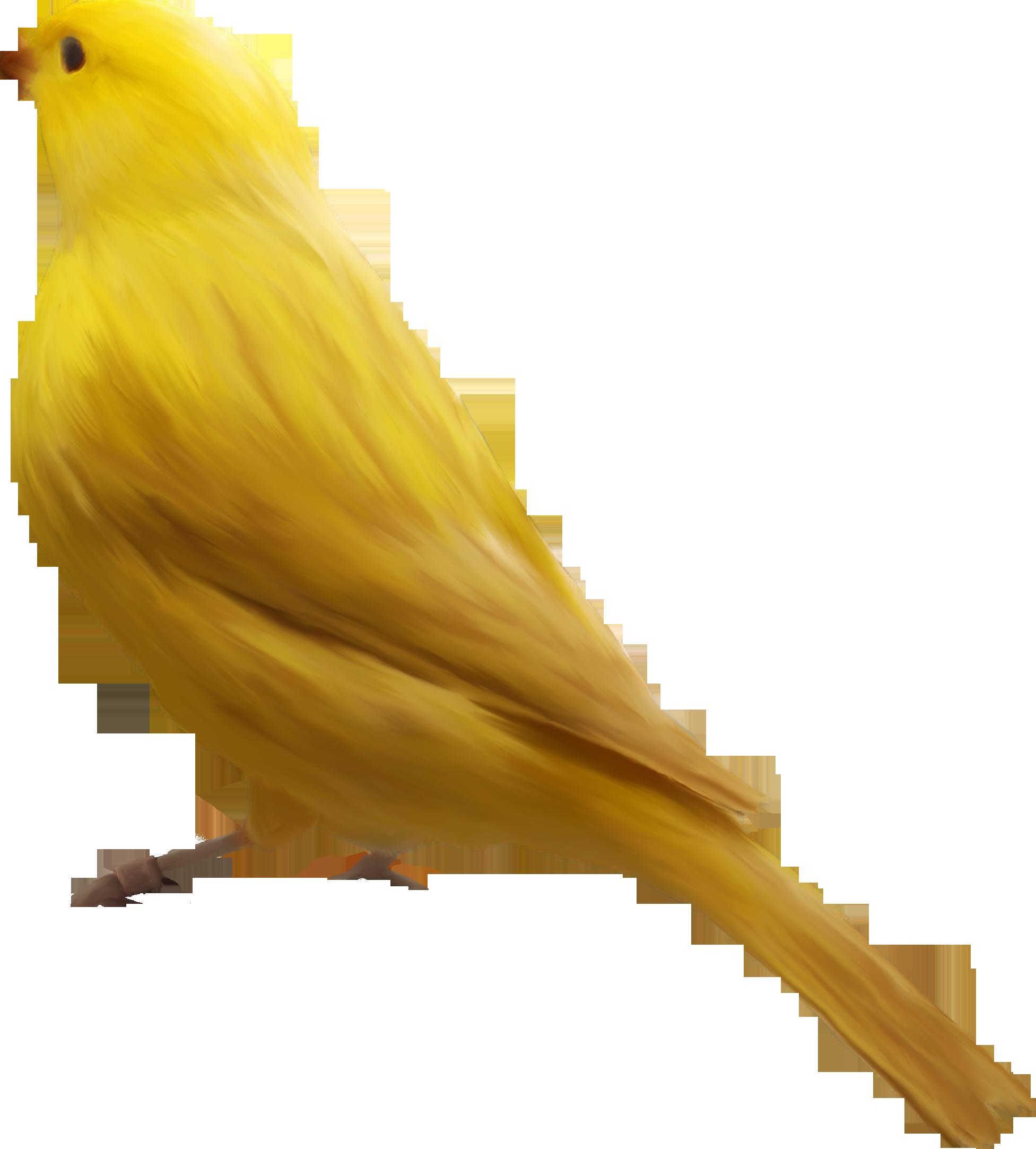 PNG Oiseau - 77786