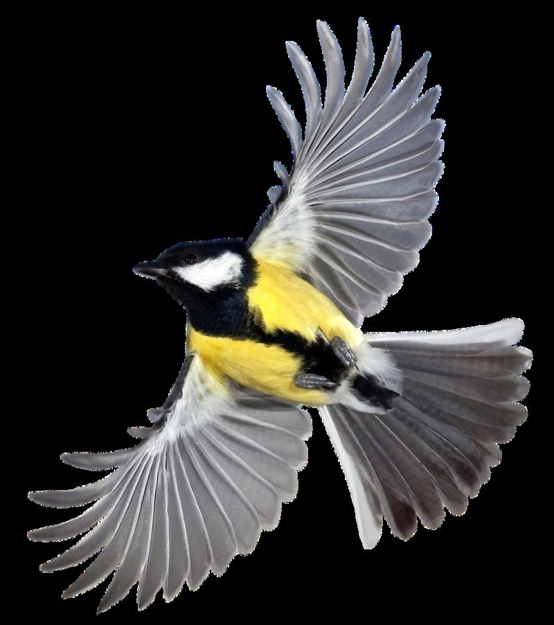 PNG Oiseau - 77781