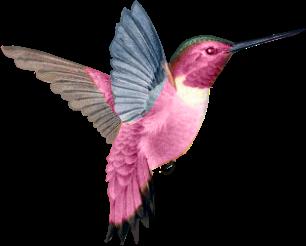 PNG Oiseau - 77789