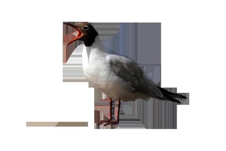 PNG Oiseau - 77779