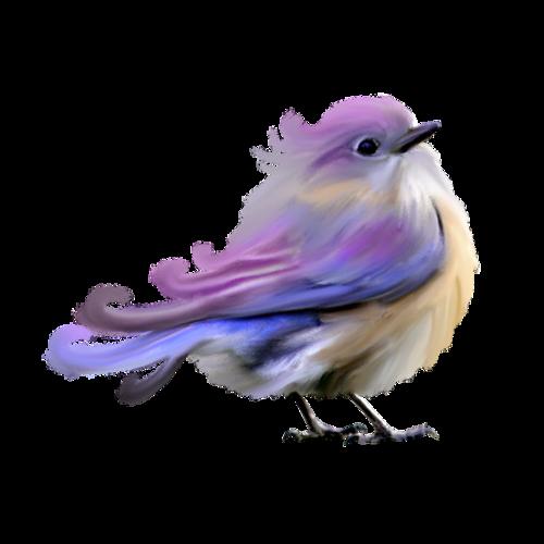 PNG Oiseau - 77782