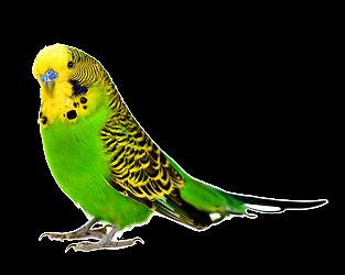 PNG Oiseau - 77791