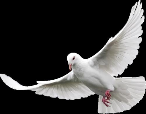 PNG Oiseau - 77787
