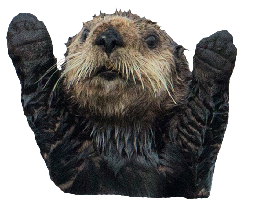 PNG Otter - 72747