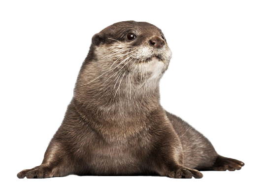 Baby-Otter.png - PNG Otter