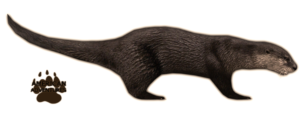 Image - North American River Otter.png | Zoo Tycoon Wiki | FANDOM powered  by Wikia - PNG Otter