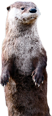 PNG Otter - 72751