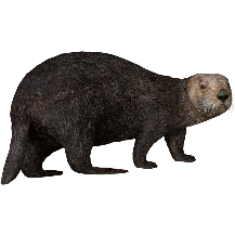 Sea Otter (Aurora Designs).png - PNG Otter