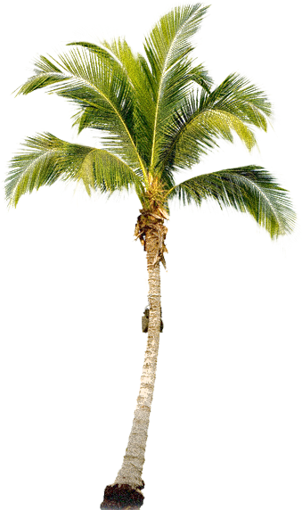 PNG Palm Tree Free - 71667