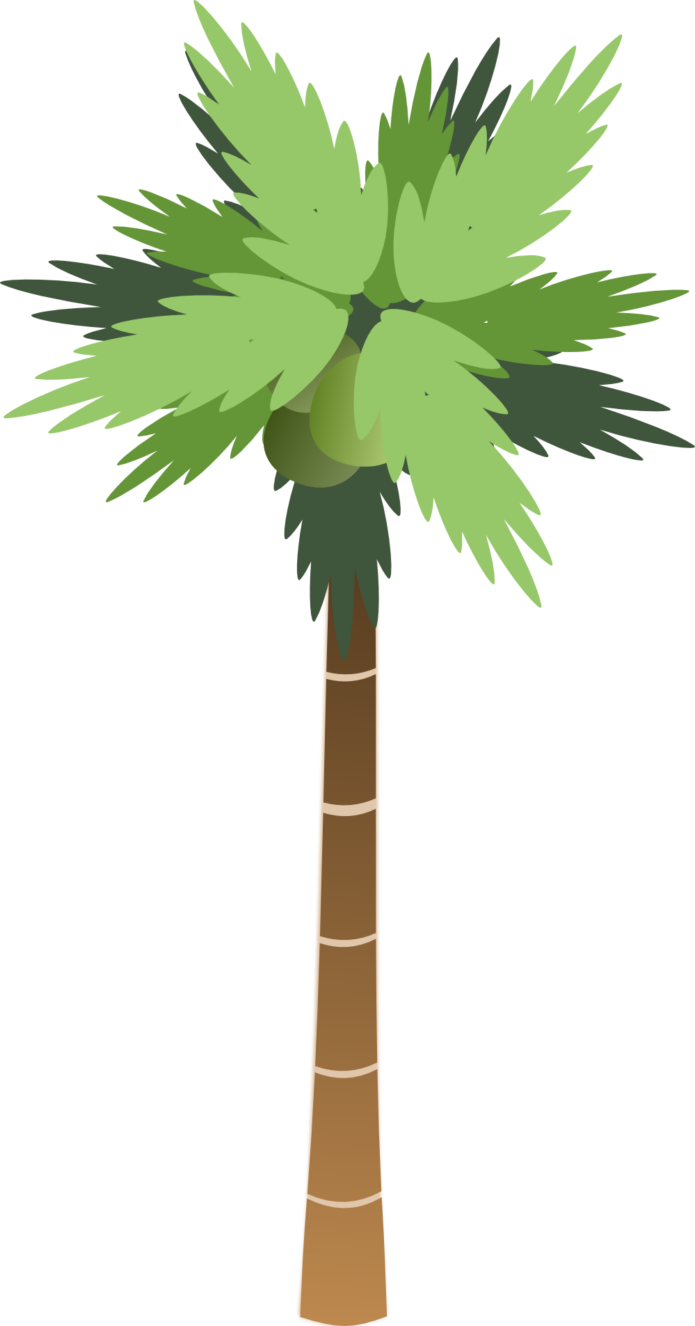 Download PNG image: Palm tree PNG - PNG Palm Tree Free