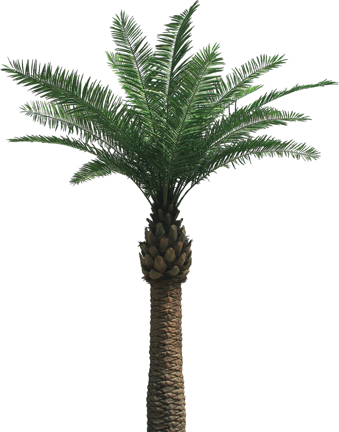 PNG Palm Tree Free - 71676