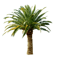 PNG Palm Tree Free - 71671