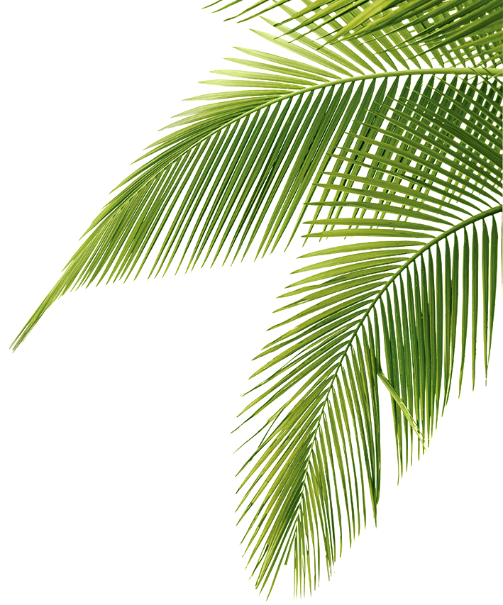 Palm Tree fronds Png - PNG Palm Tree