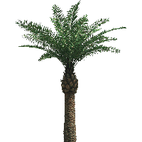 Palm Tree Png image #31889