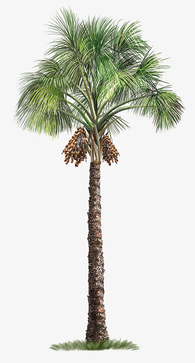Palm tree, Trees, Hand-painted Tree Free PNG Image - PNG Palm Tree
