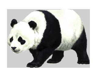 PNG Panda - 73318