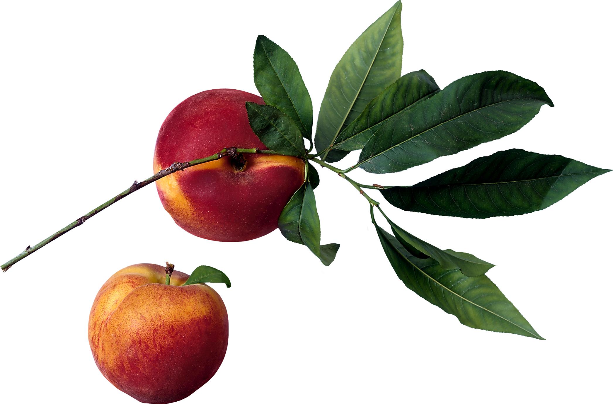 PNG Peach Tree - 164226