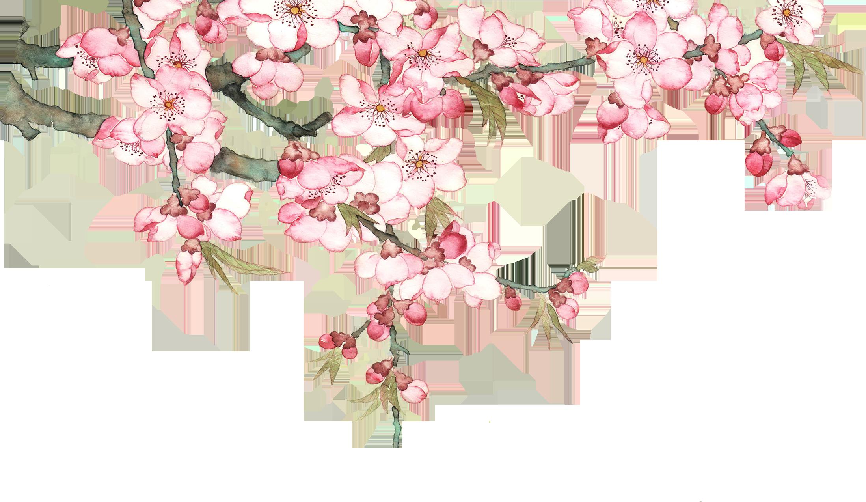 PNG Peach Tree - 164231