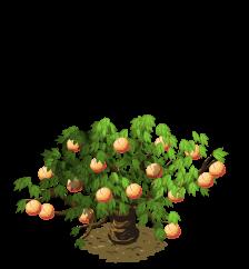 PNG Peach Tree - 164230