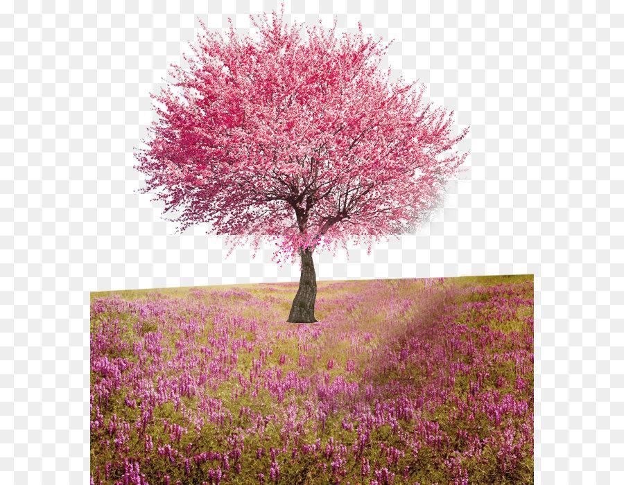 PNG Peach Tree - 164235