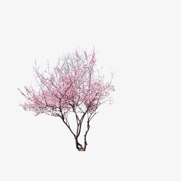 PNG Peach Tree