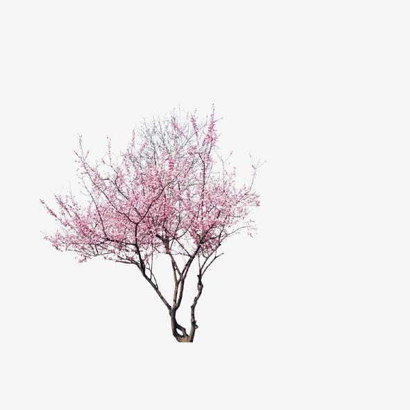 PNG Peach Tree - 164215