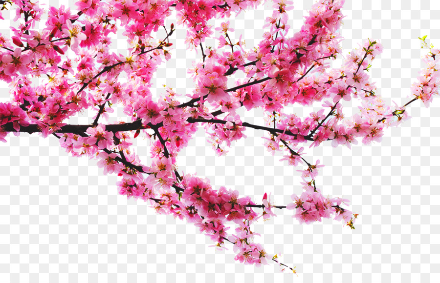 PNG Peach Tree - 164223