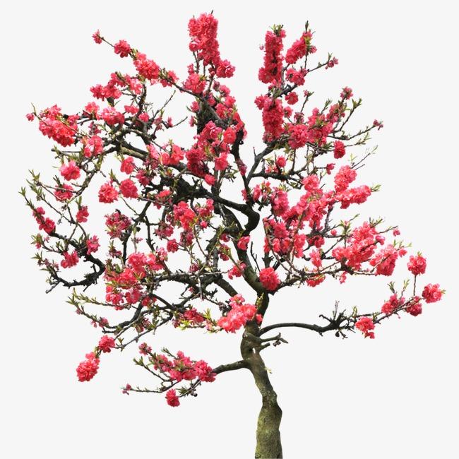 PNG Peach Tree - 164232
