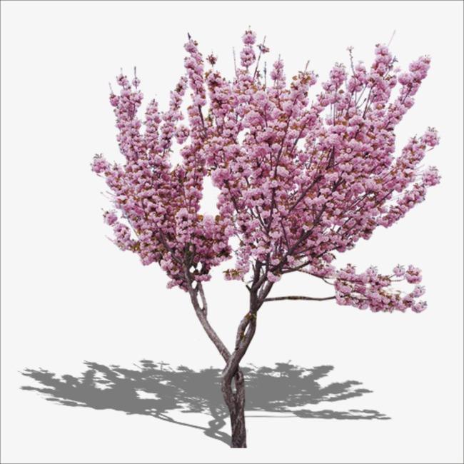 PNG Peach Tree - 164218