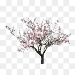 PNG Peach Tree - 164229