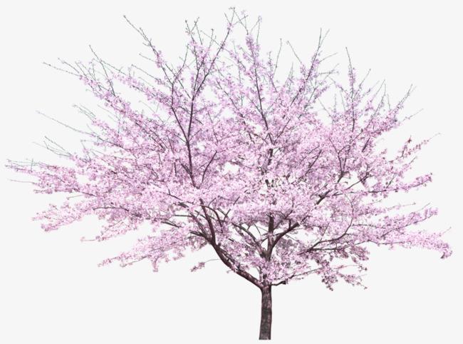 PNG Peach Tree - 164222