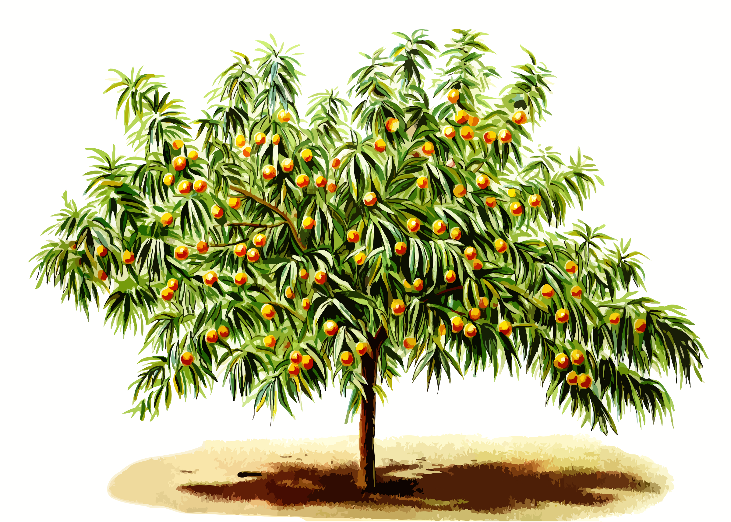 Png peach tree transparent peach tree png images pluspng for Peach tree designs