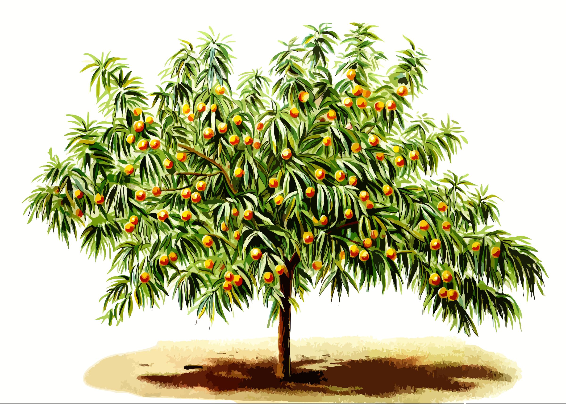 PNG Peach Tree - 164220